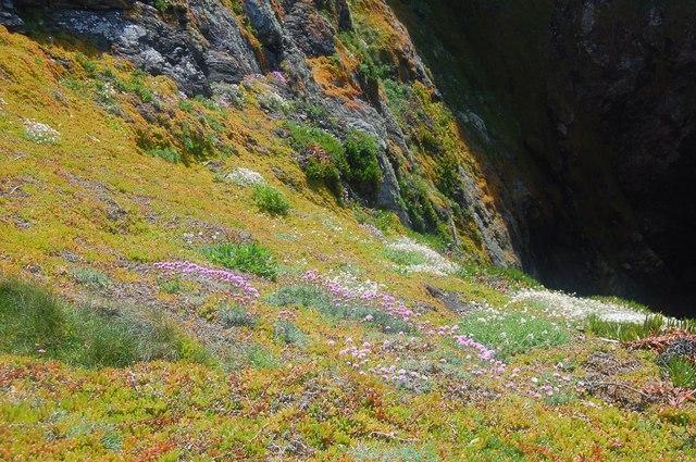 Sea Cliff near Lizard Point