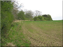 NT4676 : Field edge boundary by Dr Duncan Pepper