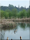 SK1134 : Pond adjacent to the A50 by Peter Taylor