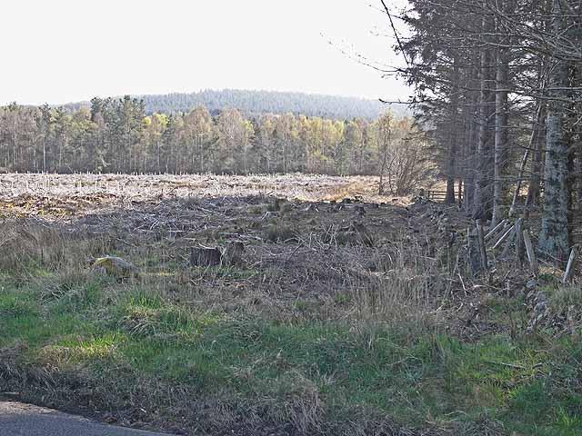 Clear felled woodland