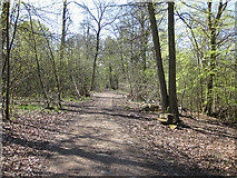 SO6210 : Forest track in spring by Pauline E