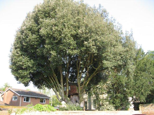 Tree House in Wimborne