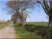 NY9874 : St Oswald's Way approaching Hallington by Oliver Dixon
