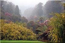 SW7627 : Trebah Gardens by Trevor Harris