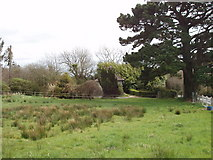 S9724 : House in trees at Muchwood by David Hawgood