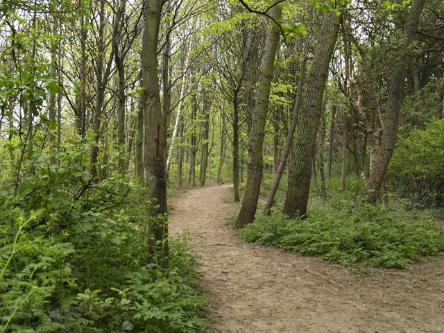 Pennyman Woods