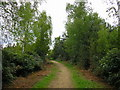 SU8565 : Path at Hut Hill, Crowthorne Wood by don cload