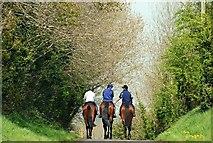 J1842 : Horse riding near the Corbet by Albert Bridge