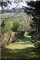 NR8390 : Path above Cairnbaan by Anne Burgess