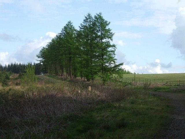 Mountain track on Mynydd Gelliwion