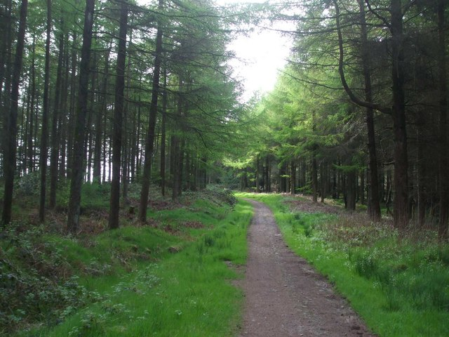 Forest track on Mynydd Gelliwion