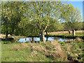 TQ2072 : Martin's Pond, in Richmond Park by Stephen Craven