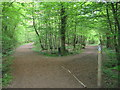 TR0033 : Saxon Shore Way and Greensand Way in Bourne Wood by David Anstiss