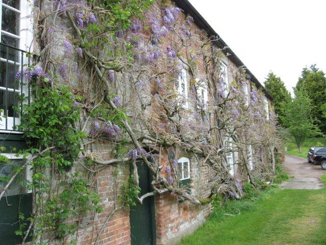 Wisteria on Keynston Mill
