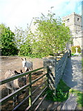 ST3970 : Donkey sanctuary by St. Andrew's church by Jonathan Billinger