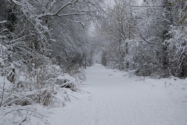 Bingham Linear Walk in Snow