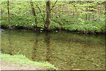 SX4970 : Buckland Monachorum: river Walkham by Martin Bodman