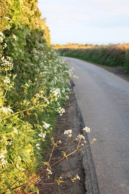 Springhead Road towards Uplyme