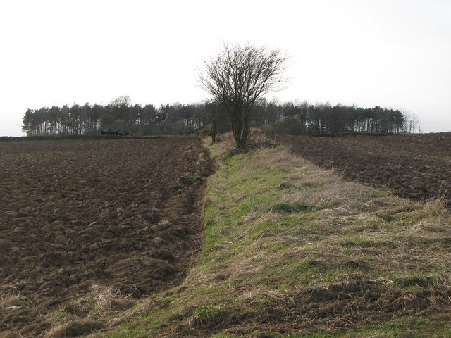 The line of the Vallum east of Greenfield Farm