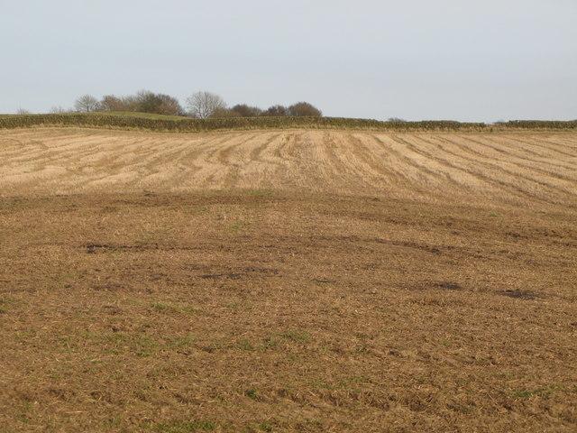 Farmland east of Greenfield Farm