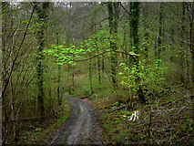 SU8413 : Monarch's Way in Whitedown Plantation by Chris Gunns