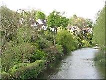 ST9102 : Back gardens in Spetisbury by John Palmer