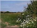 SM8633 : Coastal Flowers by John Duckfield