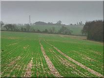 SU8413 : Looking towards Colworth Farm by Chris Gunns