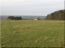 NY9569 : Pastures and woodland near Errington Hill Head by Mike Quinn