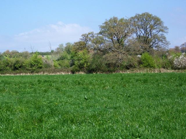 Footpath near Lower Rudge