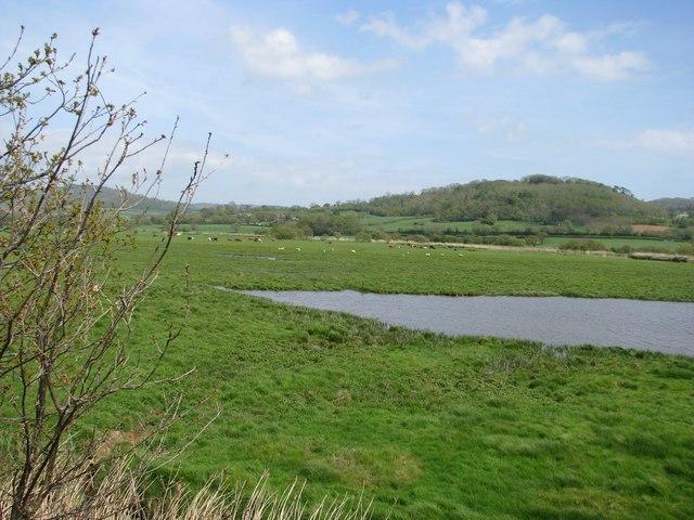 Wetlands of the Axe estuary