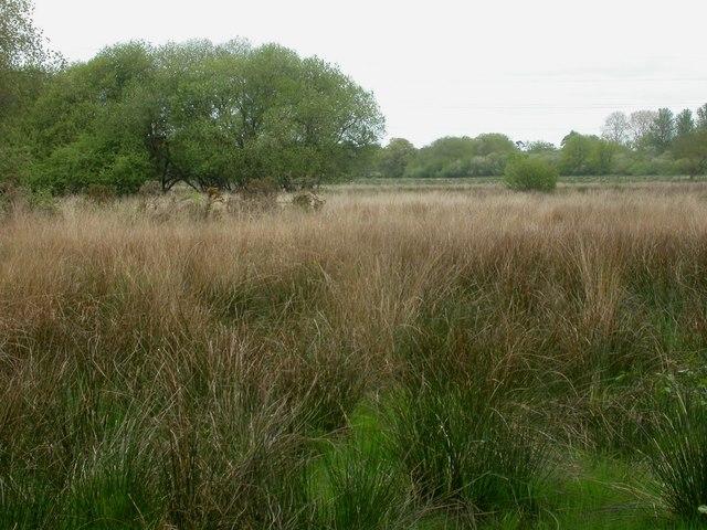 Avon Common, wetlands