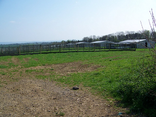 Pheasant rearing pens near Wellow