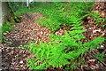 NZ4600 : Footpath in Arncliffe Wood by Mick Garratt