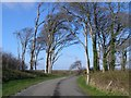 S7910 : Trees on the avenue to Tintern Abbey by Aighleann O'Shaughnessy