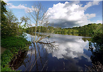 NZ1265 : River Tyne east of Stephenson's Cottage by Andrew Curtis