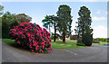 NZ1265 : Rhododendron and Giant Redwoods at Close House Mansion by Andrew Curtis
