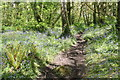 SW4123 : Path through the woods at St Loy by Rod Allday