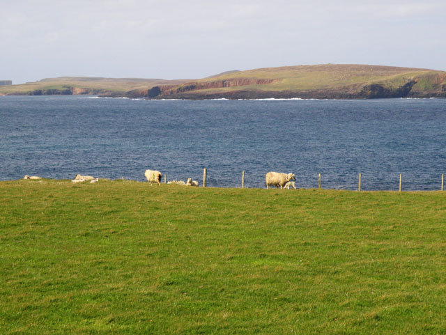 Sheep at Huxter