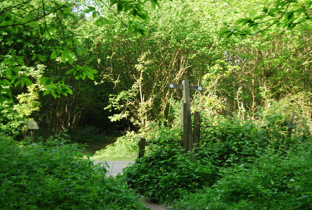 The High Weald Landscape Trail meets The Tunbridge Wells Circular Path, High Wood