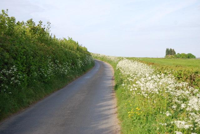 Flowering hedges along the sides of The Tunbridge Wells Circular Walk & High Weald Landscape Trail