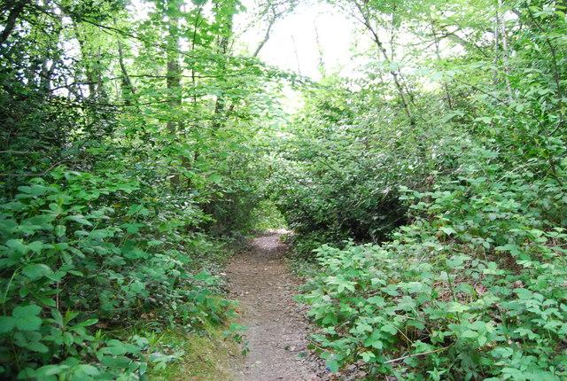 Path through Gregg's Wood by N Chadwick
