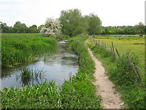 TQ5567 : The Darent Valley Path beside the River Darent by David Anstiss