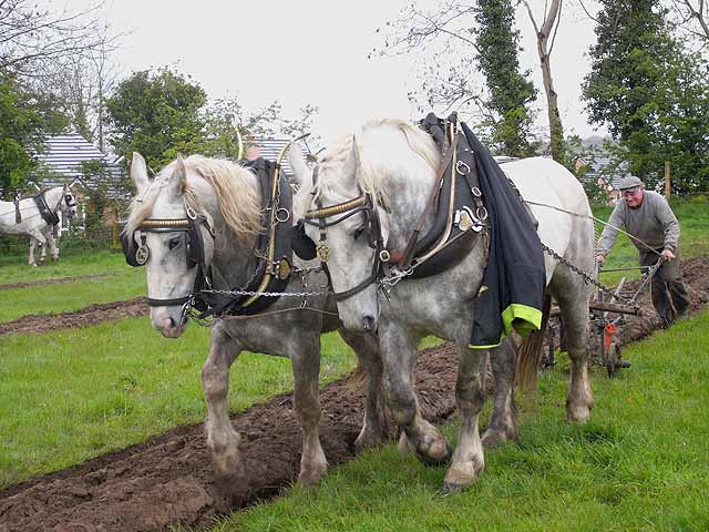 County Cavan Ploughing Championships 2009, Gowna