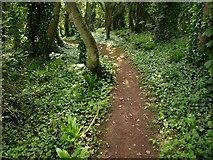 SX9364 : Path near Anstey's Cove by Derek Harper