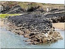 SS2006 : Mussel bed, Summerleaze beach, Bude by Tom Jolliffe