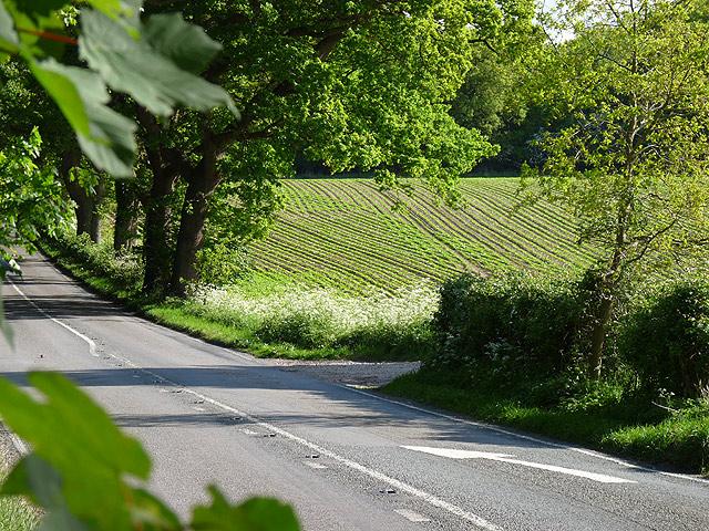 Roadside scene at Braker Hill
