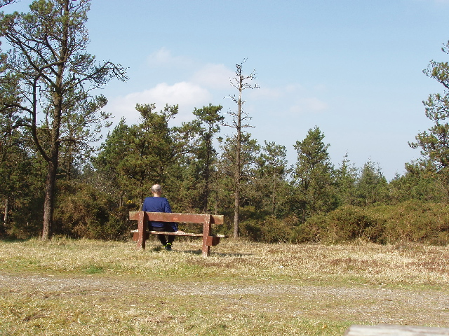 Bench in the pines on Forth Mountain