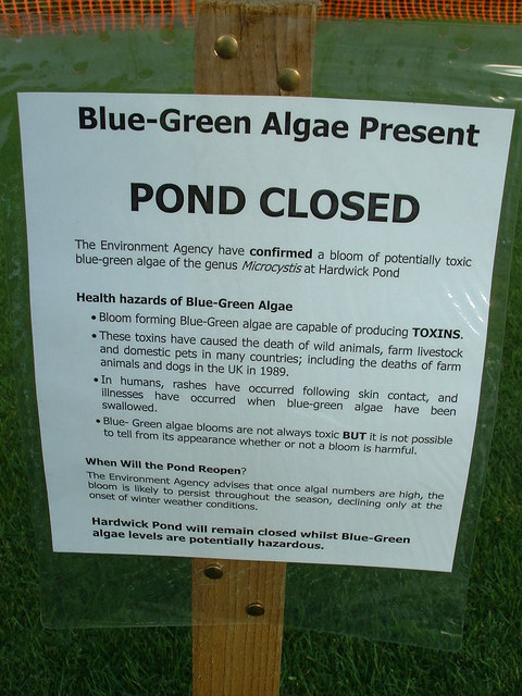 Blue-Green Algae Present