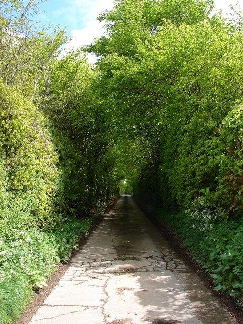 Wysebyhill Beech Hedges